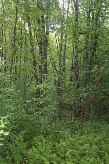 Essex County Greenbelt bought 40 Byfield acres next to a large state wildlife management area .
